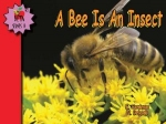 A Bee Is An Insect